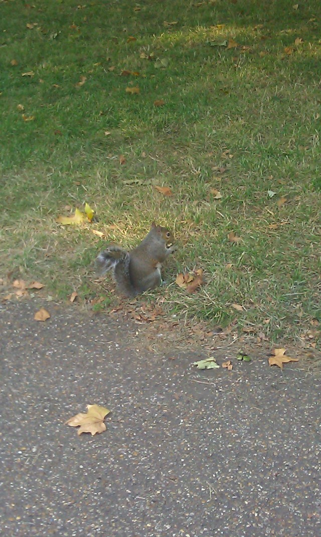 Un écureuil en train de manger dans Hyde Park [A squirrel eating in Hyde Park]