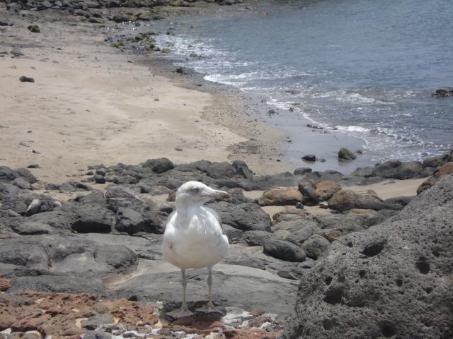 Une mouette à Atlantic Gardens [A seagull in Atlantic Gardens]